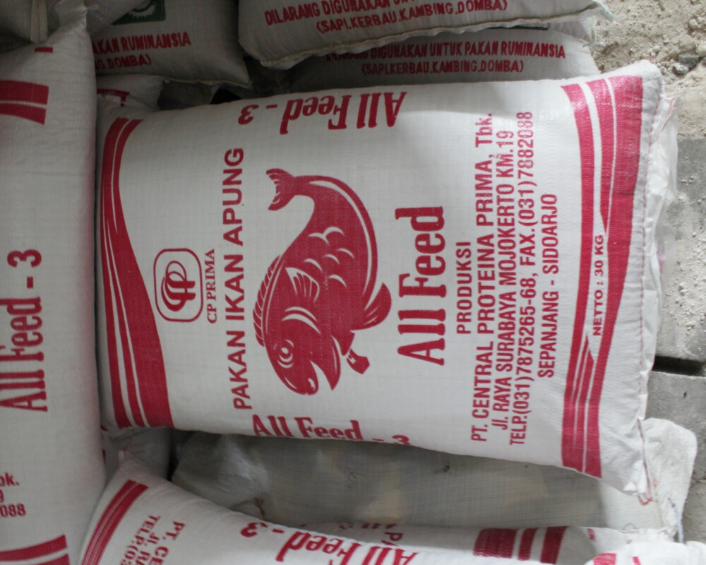 Supplier Bibit bayam Kanigoro