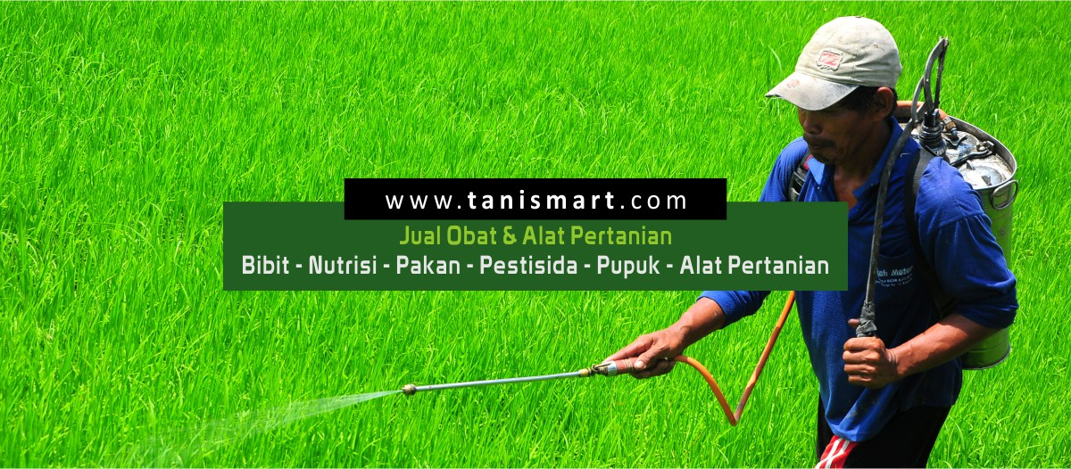 Supplier Pupuk Daun Provit Orange Slawi